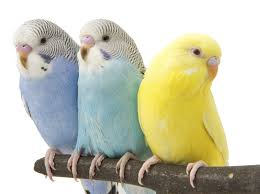 Complete 3 - Budgerigar w/Cage