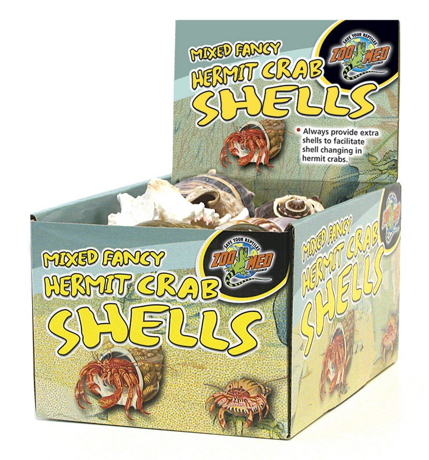 Hermit Crab Fancy Shell - Assorted