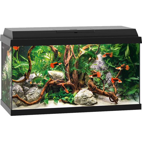Primo 60 LED Aquarium - Black
