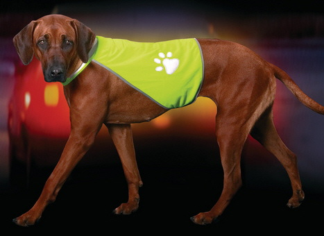 Safety Dog Security Waistcoat L